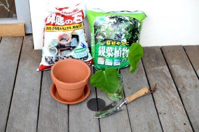 モンステラの鉢植えの準備