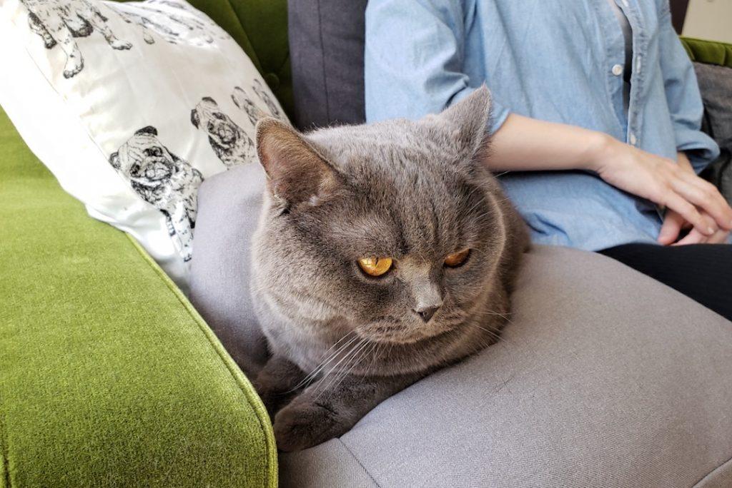 どっしりと居座る猫様